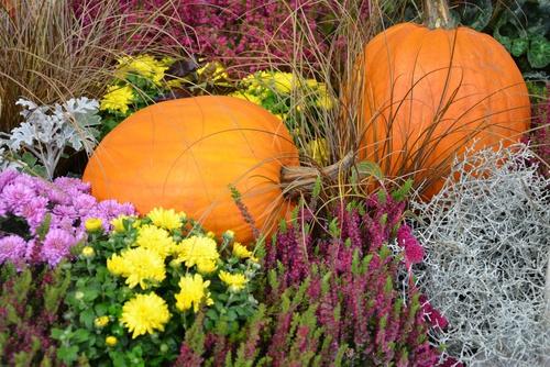 Herbstartikel